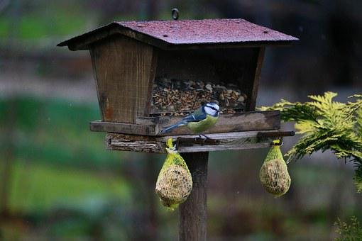 Blue Tit, Bird, Garden, Natureworld, Tit, Small Bird