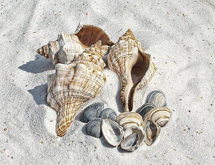 Illustration, Shell, Shells, Beach, Sand, Sea, Shelling