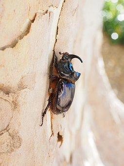 Rhinoceros Beetle, Horn, Tree, Plane, Log, Bark