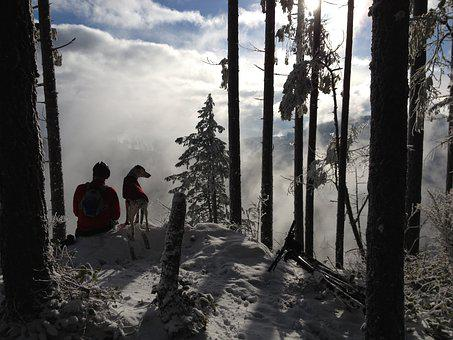 Man's Best Friend, Winter Hiking, Hiking, Forest