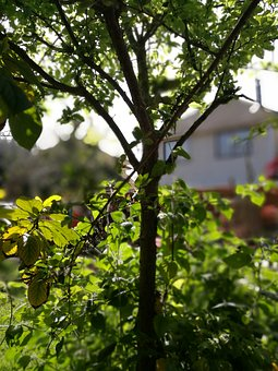 Tree, Plum, Green, Patio, Background, Vegetation