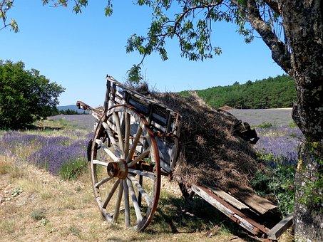 Lavender, Sault, Provence, Vaucluse, Summer