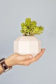 Studio Somi, Mexico, Handmade, Plant, Suculent