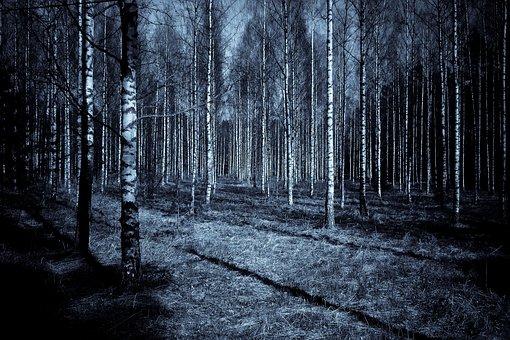 Forest, Night, Dark, Shadows, Sky, Wood, Birch