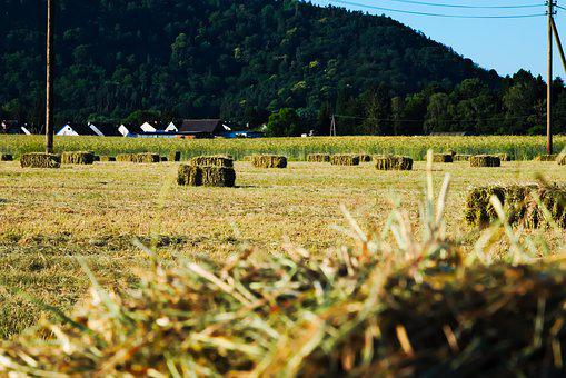 Field, Hay Bales, Hay, Harvest, Nature, Agriculture