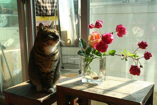 Flower Arrangement, Cat, House Cat, Big Cat