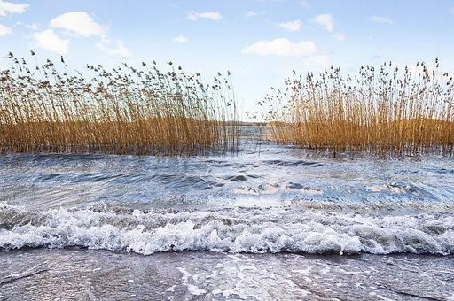 Sea, Beach, Reed, Wave, Seaside, Water, Landscape