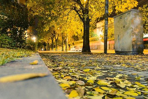 Autumn, Leaves, Yellow, Night, Street, Trees, Tree