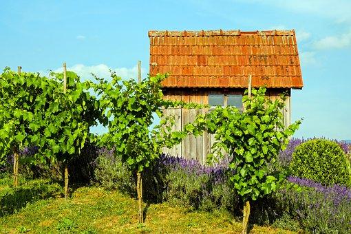 Landscape, Rebhaus, Vacation, Idyllic, Harmonious