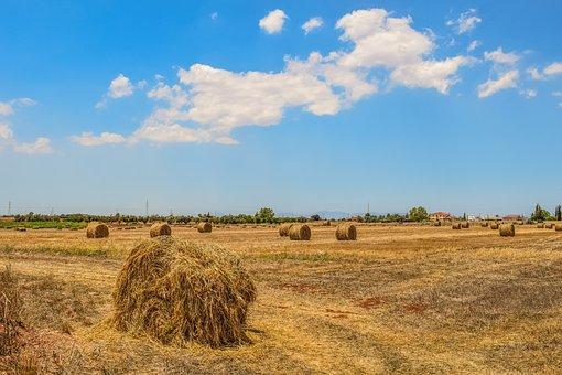 Barley Fields, Hay Bales, Landscape, Agriculture, Rural