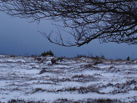 Snow, Winter, Nature, Snow Landscape, Naked Trees