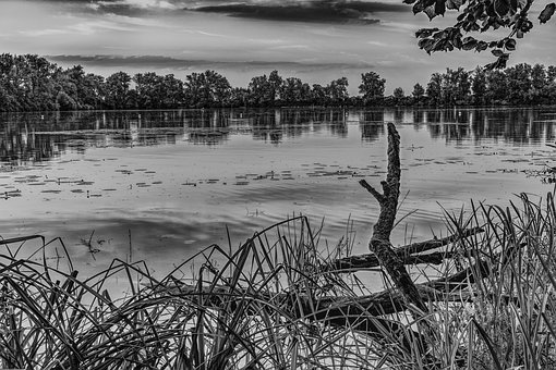 Lake, Black White, Still Life, Nature, Water, Landscape