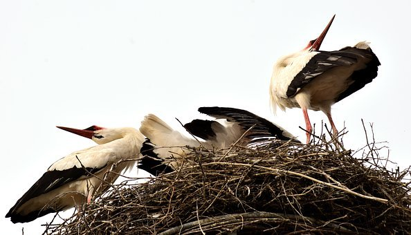Storks, Stork Couple, Welcome, Rattle, Bill