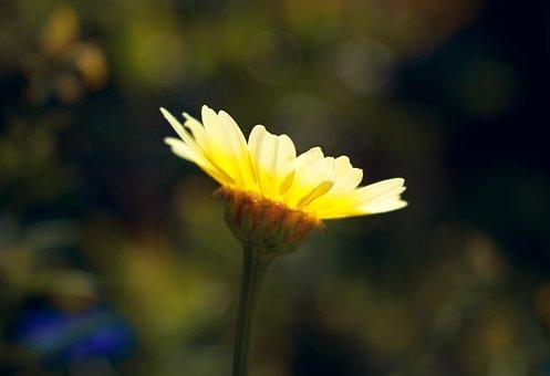 Flower, Summer, Nature, Summer Flower, Summer Plant