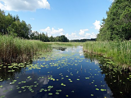 Lake, Reed Beds, Water Lilies, Water Courses, Sörmland