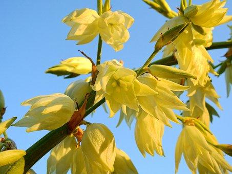 Flower, Blossom, Bloom, Bloom, Nature, Plant, Flora