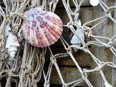 Shell, Sea, Lake, Beach, Fish, Fishing, Fishing Net