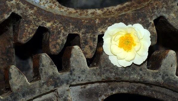 Gear, Wild Rose, Metal, Iron, Old, Weathered, Flower