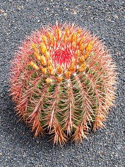 Jardin De Cactus, Cactus, Lanzarote, Spain