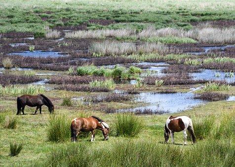 Pony, Marsh, Brière, Browse, Landscape