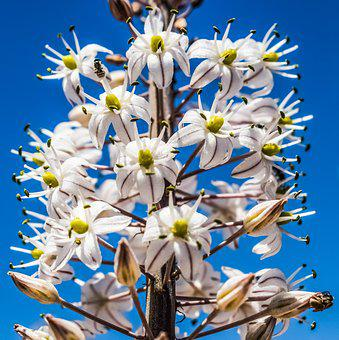 Flowers, White, Stripes, Inflorescence, Nature, Plant