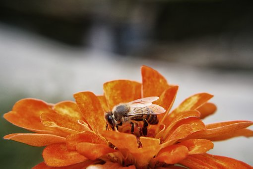 Bee, Pollination, Flowers, Garden, Insect, Pollen