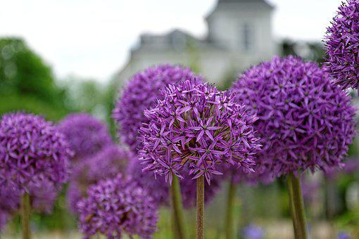 Flowers, Purple, About, Ball