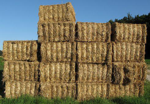 Straw, Straw Bales, Bale, Hay, Hay Bales, Cattle Feed