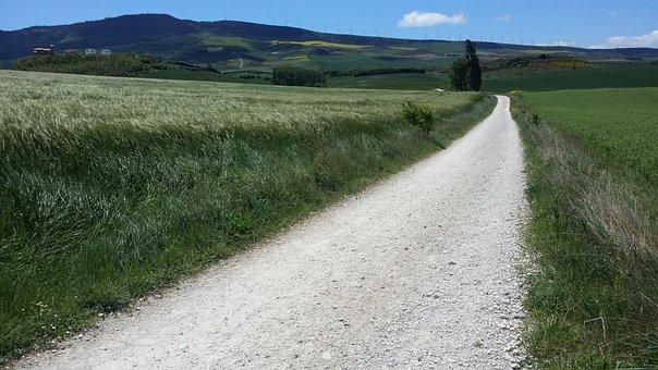 The Pilgrim's Trail, Spain, Wheat Fields