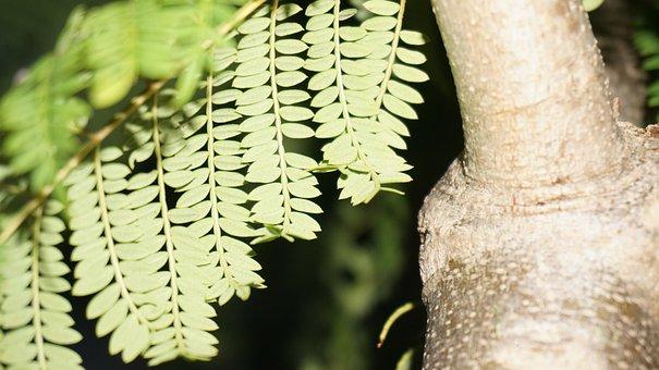 Leaves, Tree, Wood