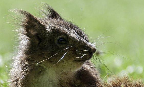 Squirrel, Nature, Wildlife, Brown, Creature, Furry