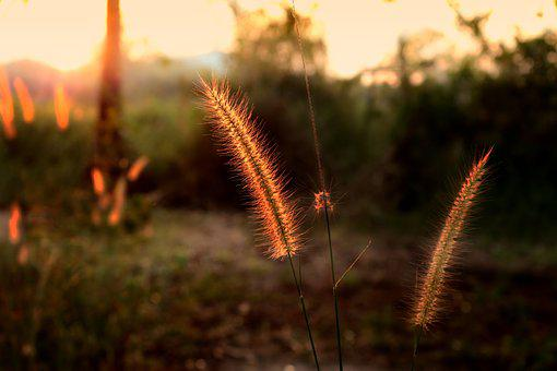 Flowering Grass, Mead, Nature, Grass, By Nature