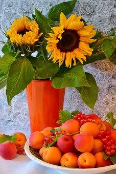 Apricots, Sunflower, Fruit, Stone Fruit, Flowers, Sweet