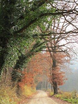 Fog, Colourless, Forest Path, Autumn Forest