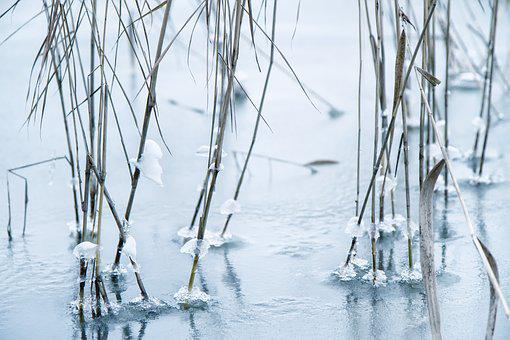 Reed, Frozen, Cold, Nature, Ice, Winter, Sea, Frost