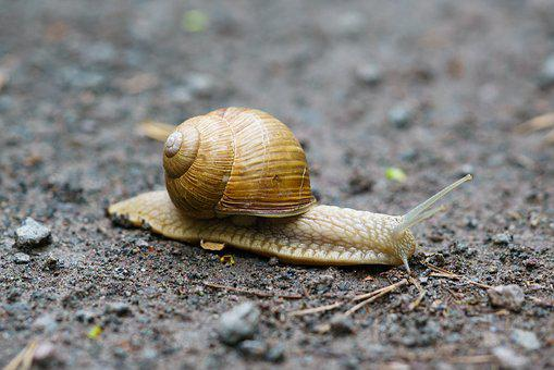 Snail, House, Macro, Slowly, Close Up