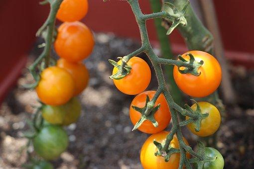 Vegetables, Tomato, Mini Tomato