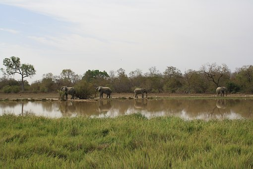 Ghana, Elephants, Natural Reserve, Mole National Park