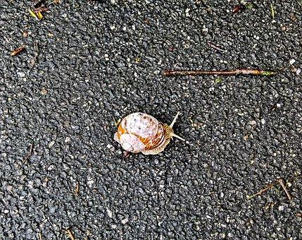 Snail, Mollusk, Shell, White Brown, Delicate Sensor