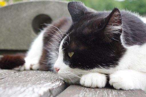 Cat, Sleep, Rest, In The Park, Animal