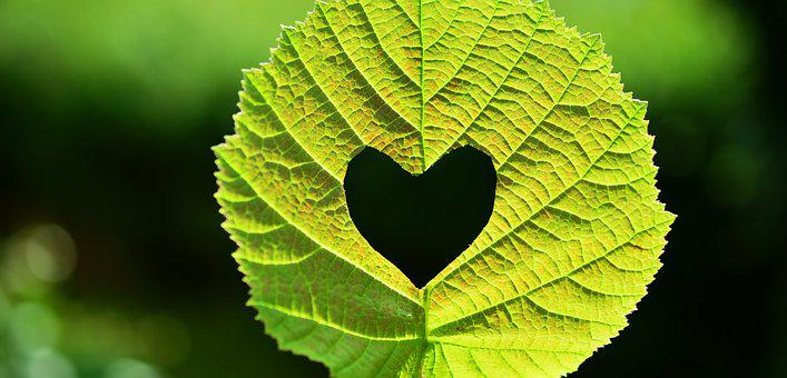 Leaf, Green Leaf, Back Light, Heart, Sweetheart