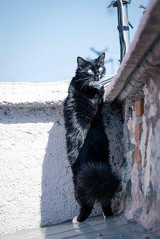 Cat, Naughty, Eyes, Animal, Pet, Kitten, Cute, Portrait