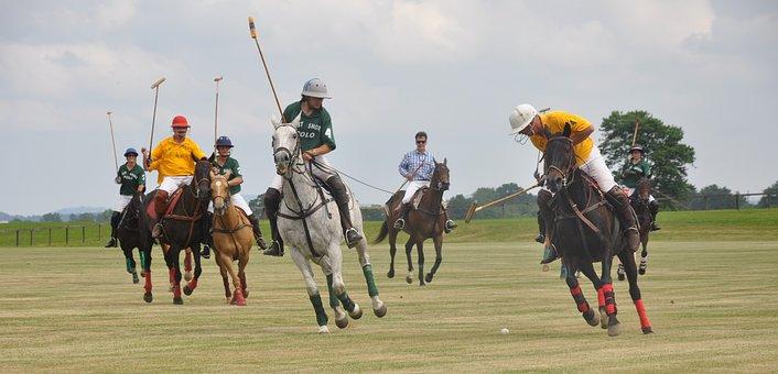 Polo, Horses, Riding, Sport, Club, Player, Equine