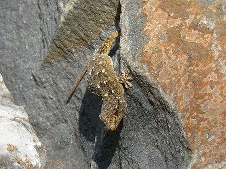 Dragon, Gecko, Rock, Texura, Lizard, Reptile
