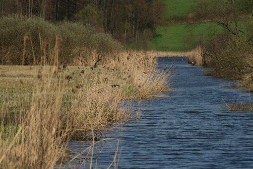 Water, River, Stream Edge