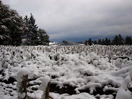 Snow, Stubble, Cornfield, First Snow, Winter Blast