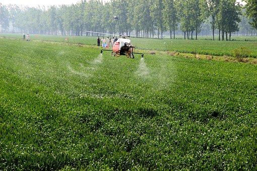 Wheat, Uav, Disease Prevention