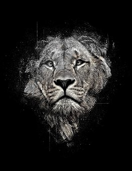 Lion, Lion Abstract, Abstract, Black And White, Black