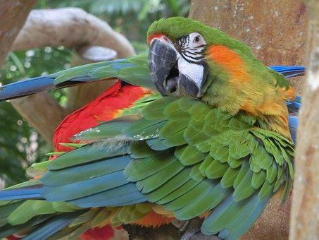 Macaw, Parrot, Singapore Bird Park, Tropical, Colourful
