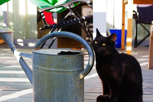 Cat, Kitten, Black, Watering Can, Cute, Pet, Animal